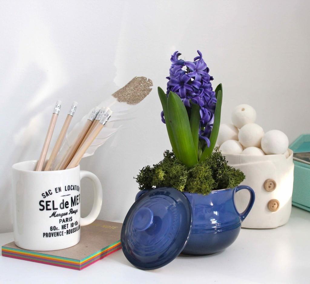 hyacinth at home
